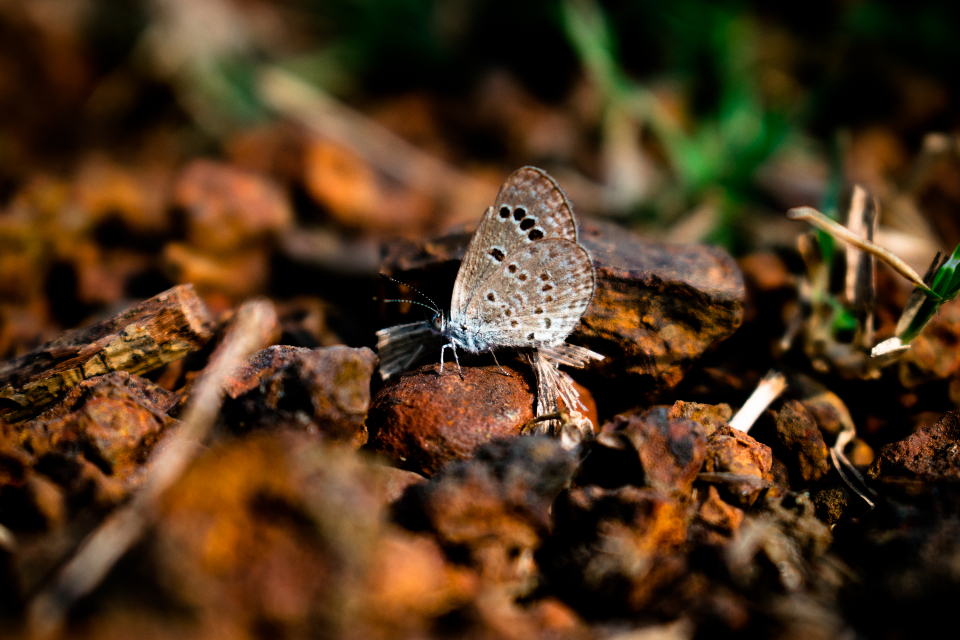Little Butterfly butterfly butterfly-insect