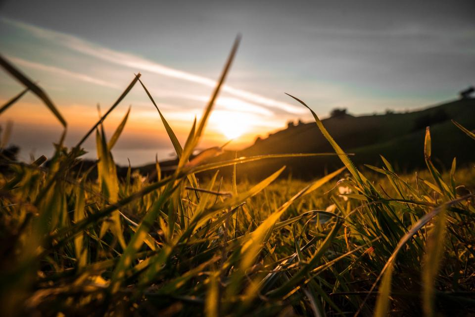 sunset dusk plants grass field nature sun rays