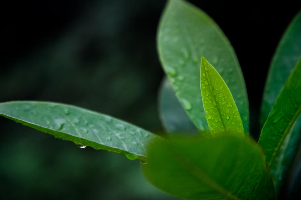 nature plants leaves veins rain water droplets still bokeh green