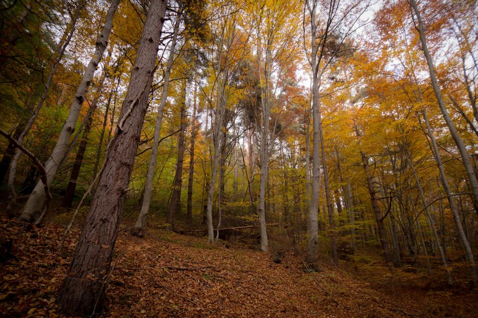 leaf fall autumn trees plant landscape mountain forest nature