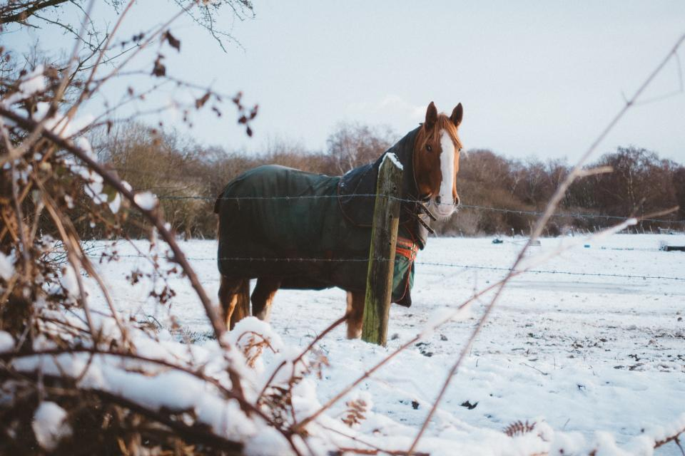 horse animal stem grass bokeh trees nature plants branches snow fence