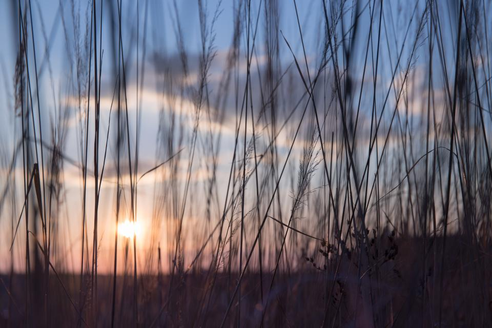 nature grass stems stalks sway outdoors light shadow silhouette sun dusk