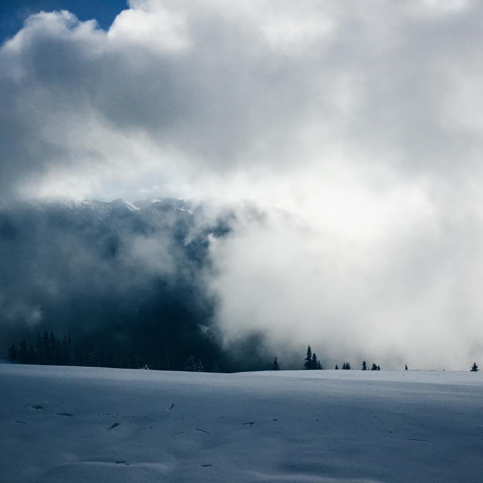 mountain highland snow winter fog cold trees plant nature