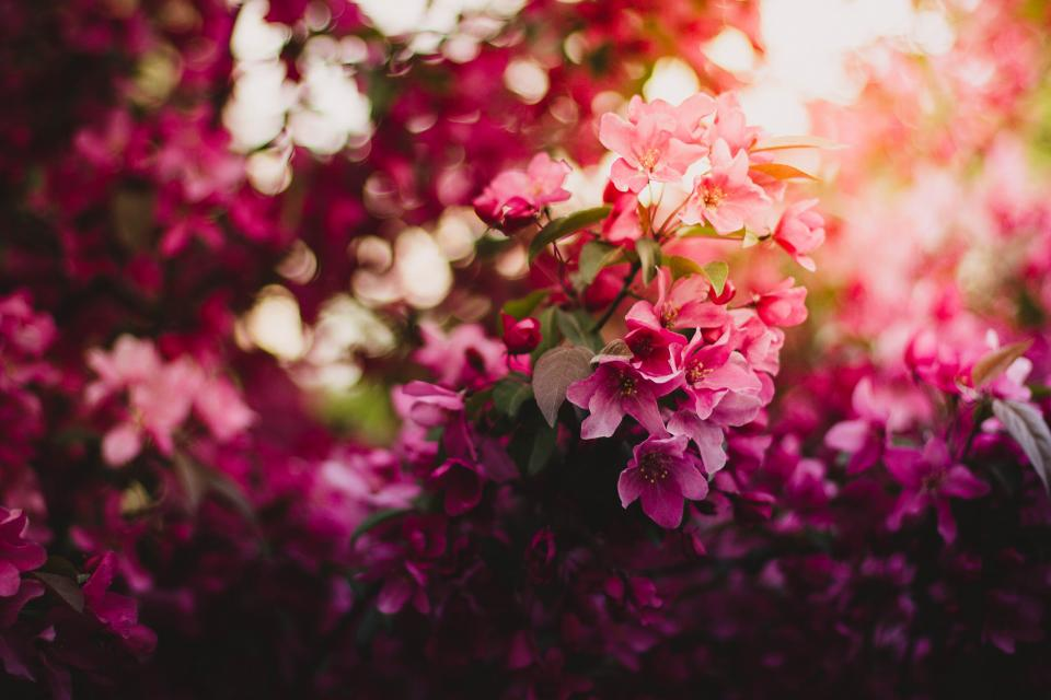 pink flower bloom petal leaves plant nature green blur bokeh
