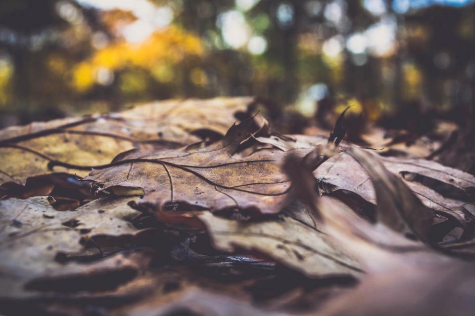 leaf fall autumn outdoor blur bokeh