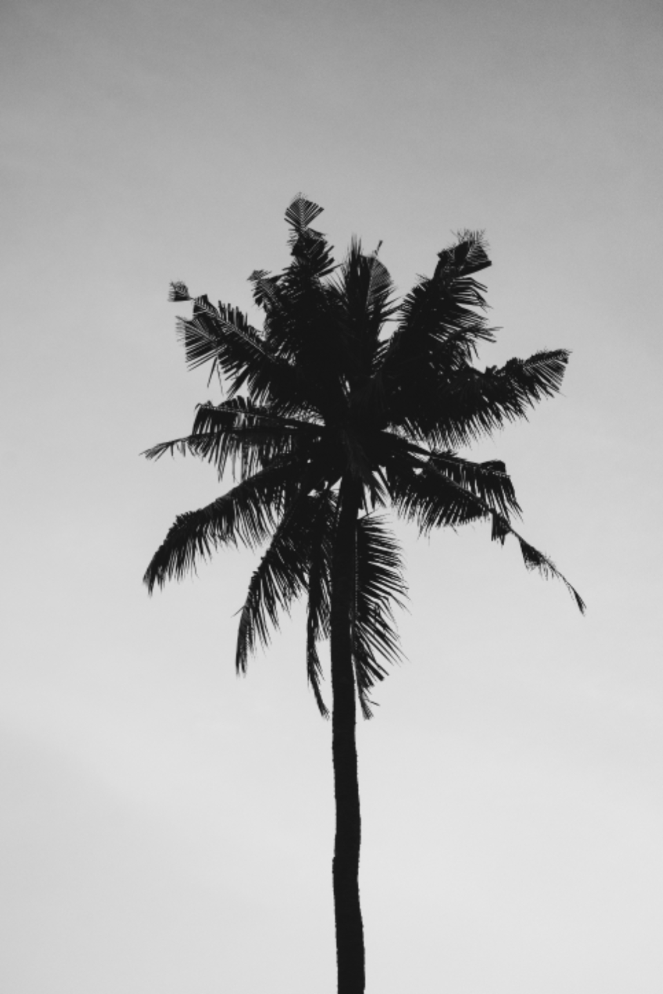 coconut tree cloudy summer nature palm tree gray sky green plant