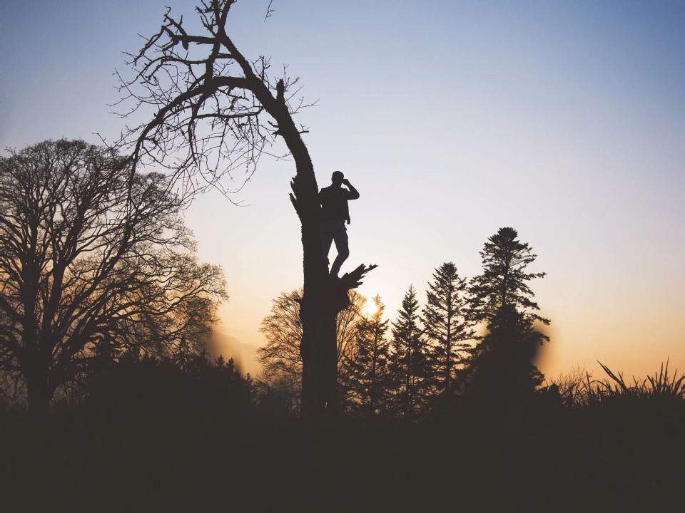 trees branch plant nature sky sunset silhouette people man climbing