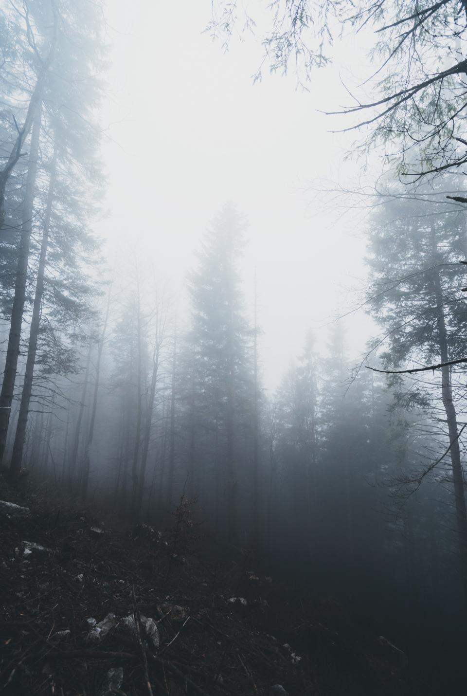 woods forest mountain trees plants foggy landscape nature outdoor