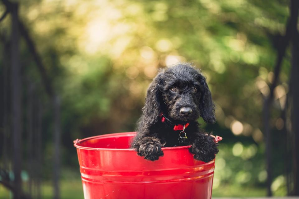 dog puppy pet animal bucket pail bokeh