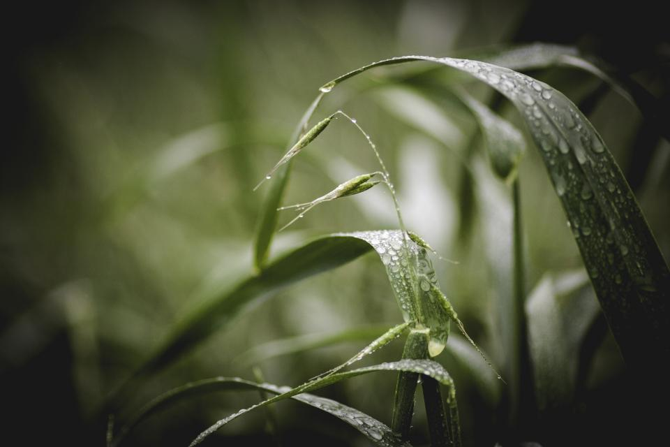 nature leaves grass rain wet droplets still bokeh