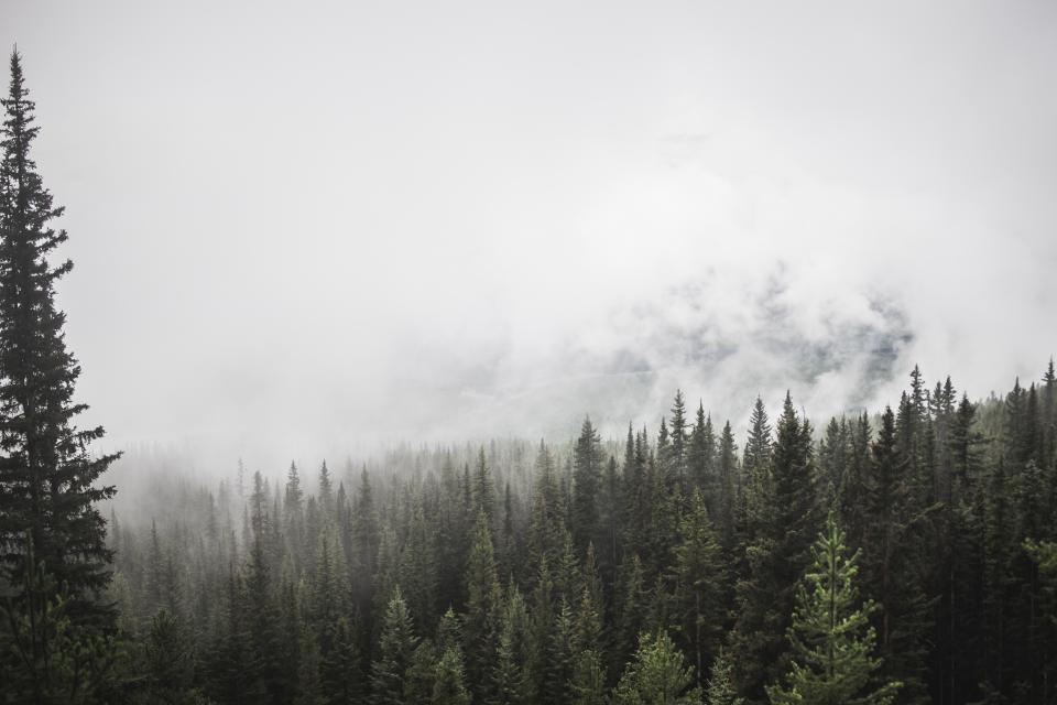 forest mountain trees pine fog clouds sky green white view