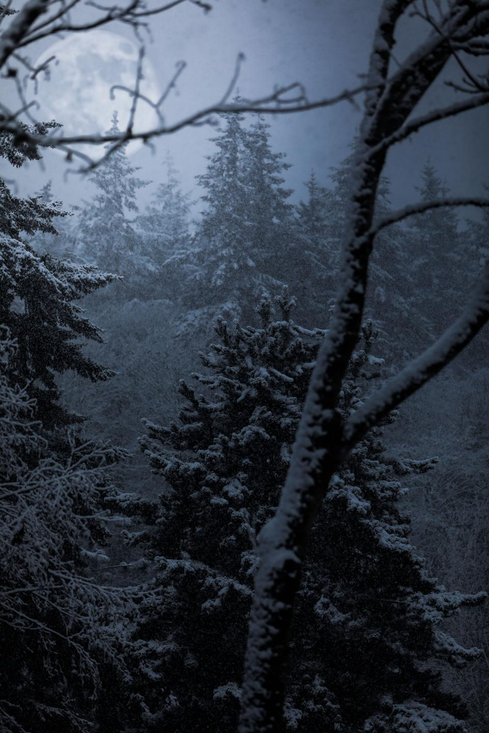 trees plant forest fog cold weather snow winter