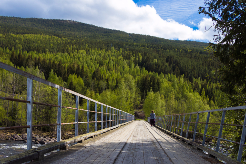 Norway forest mountian bridge travel photo color amazing relax