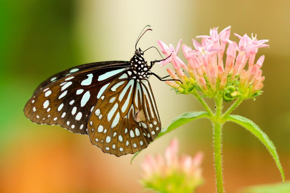 butterfly nature insect flower green leaves petal plant