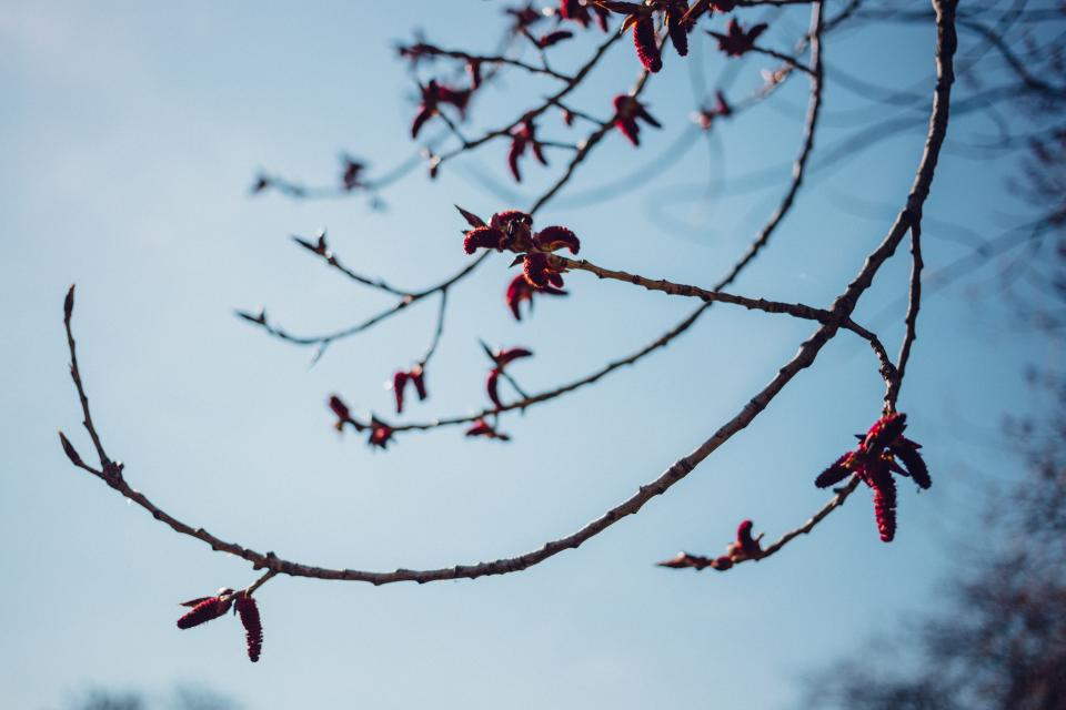 tree branch plant nature flowers sky