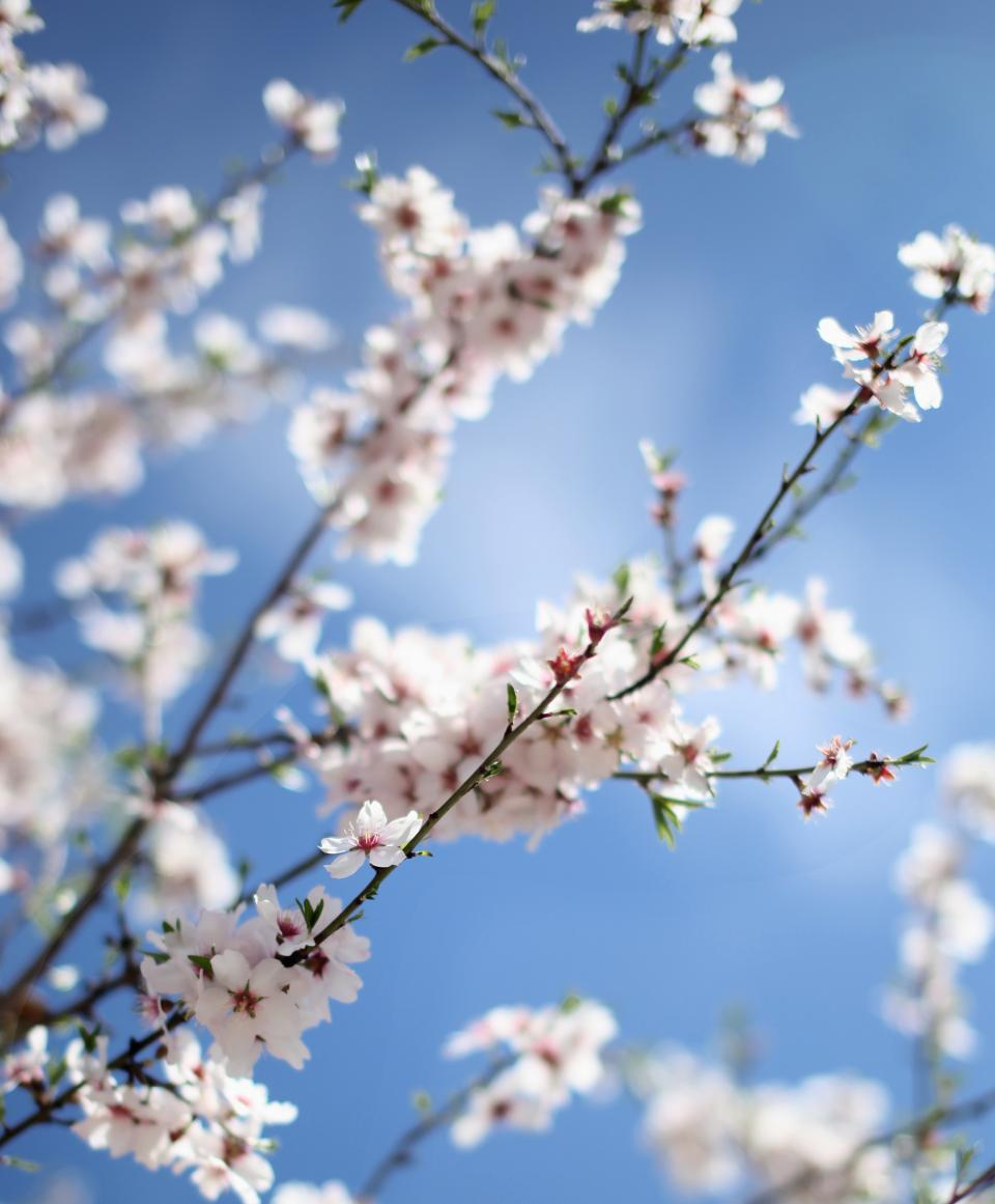 flower nature blossom blur bokeh white petals sky beautiful aesthetic branch