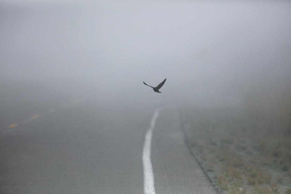 road street fog outdoor bird animal flying