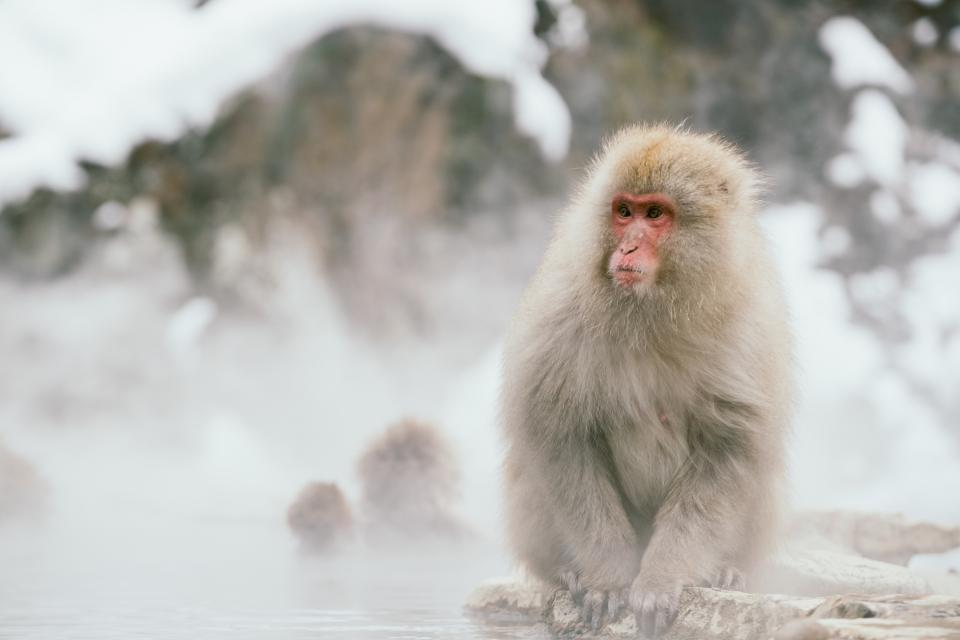 nature snow water animals monkey
