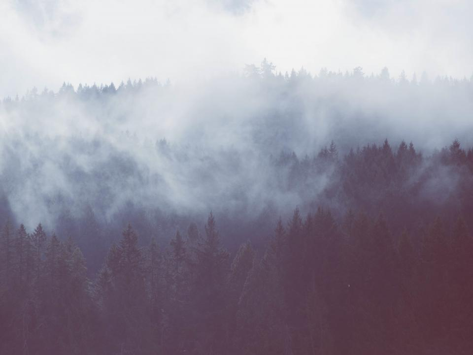 trees forest woods fog foggy landscape nature outdoors mountains