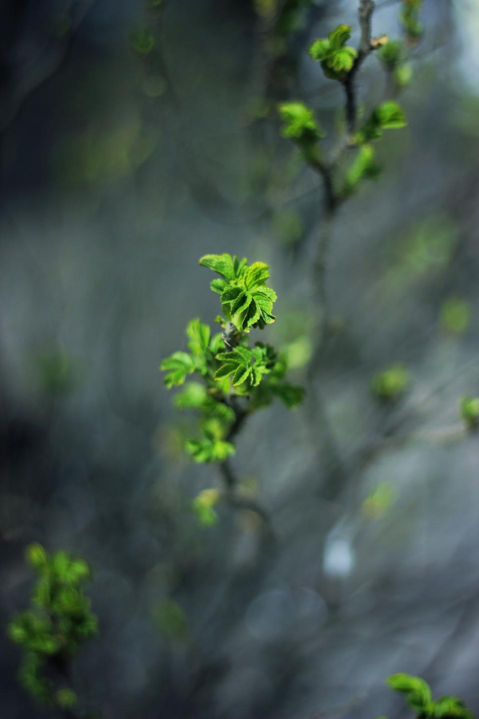 green leaf plant nature blur