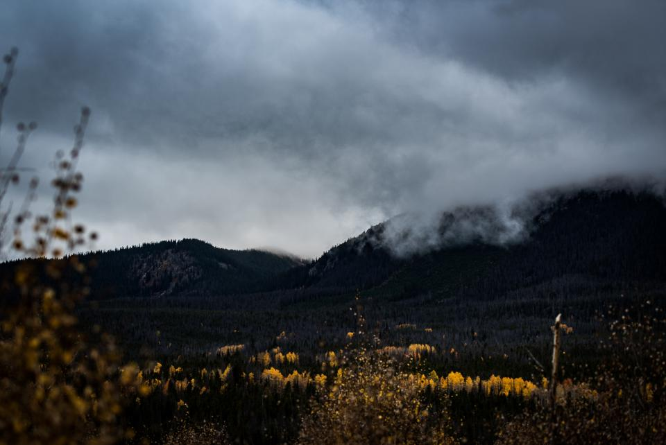 trees plants nature autumn fall mountain landscape valley dark clouds sky flower