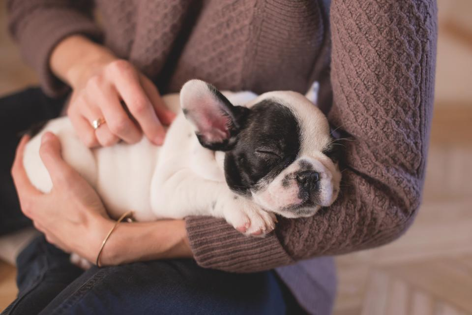 animals dogs domesticated pets eyes muzzle adorable pet sleep woman lady people arms still bokeh family