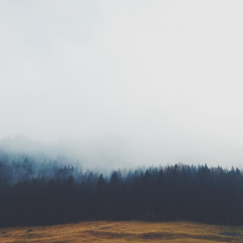 trees forest fog grey sky field grass nature