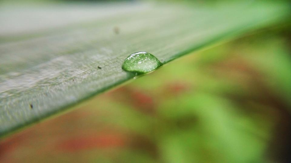 green leaf plant nature wet rain water drops blur