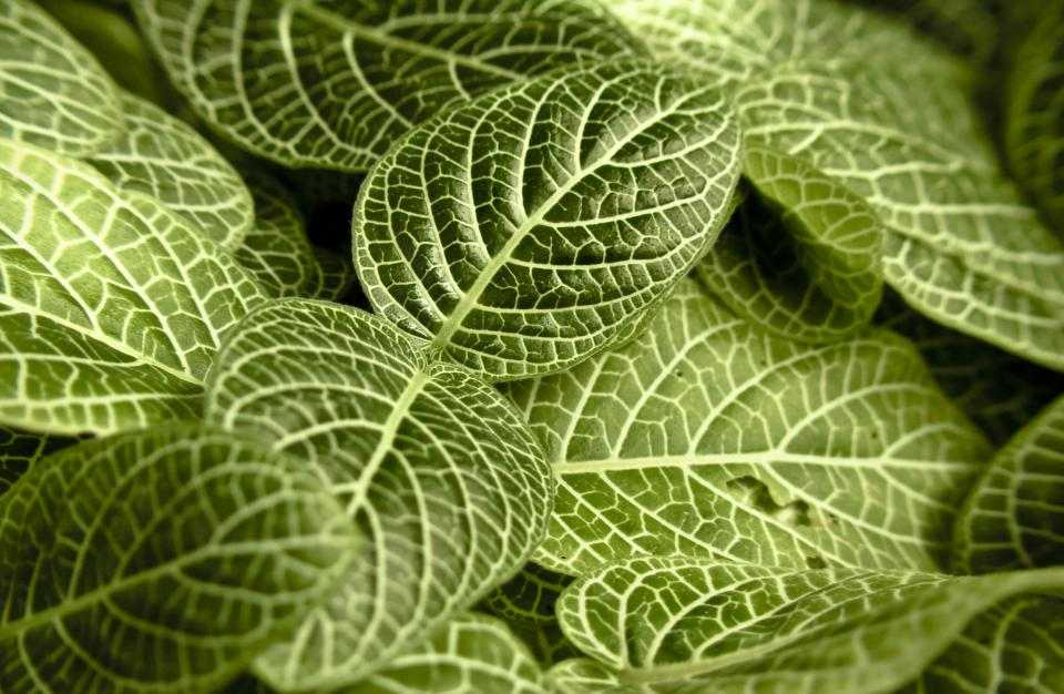 green leaves plants nature