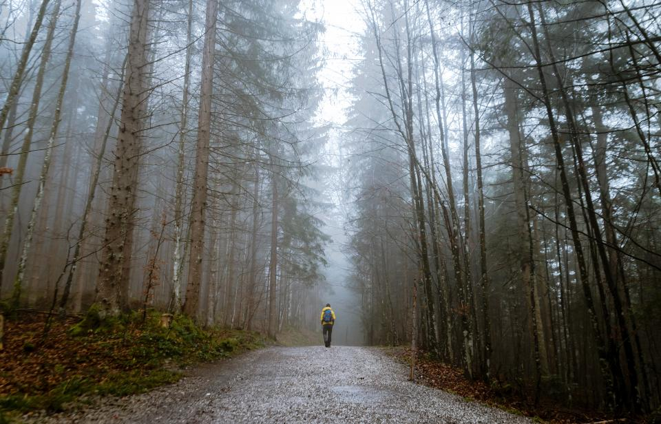 people man alone walking travel adventure climbing trek road path trees plants forest nature rain fog