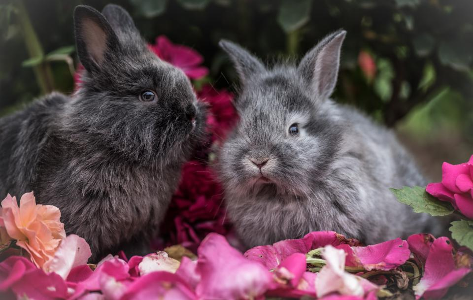 rabbit pet animal flowers outside trees plants nature