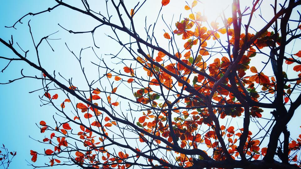 nature trees leaves branches twigs sky sun light peep autumn fall
