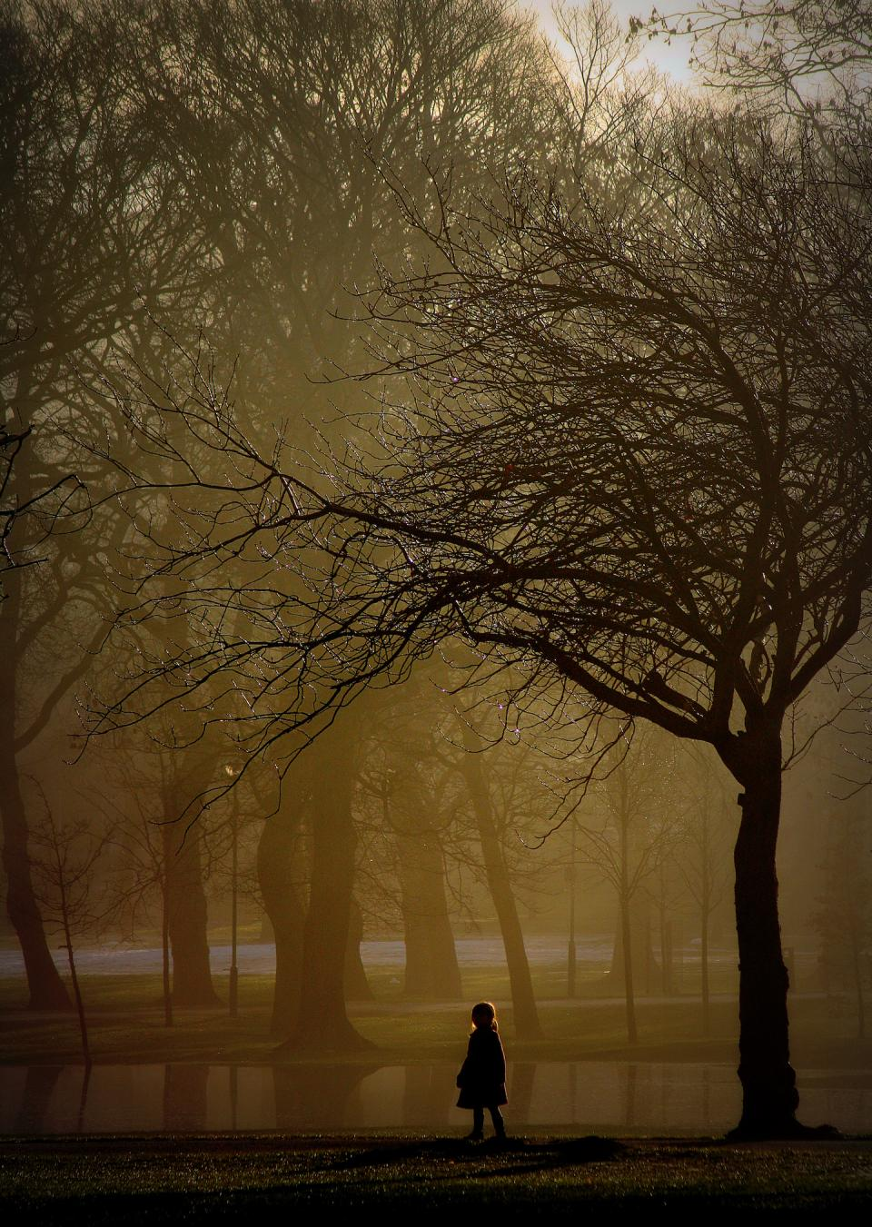 nature park trees fog haze yellow branches sunlight silhouette people kid child