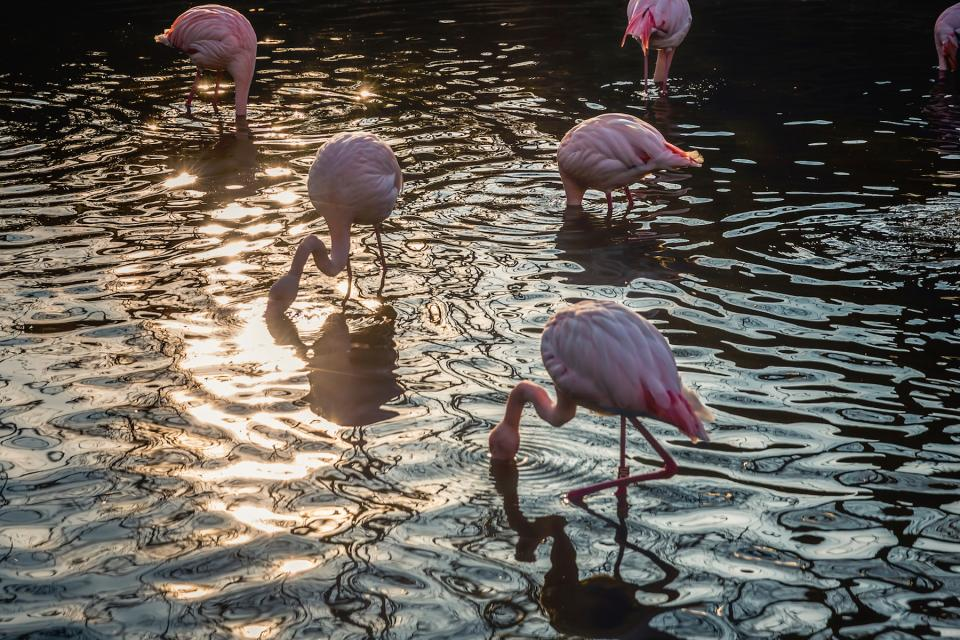 nature water animals birds flamingos pink sunlight