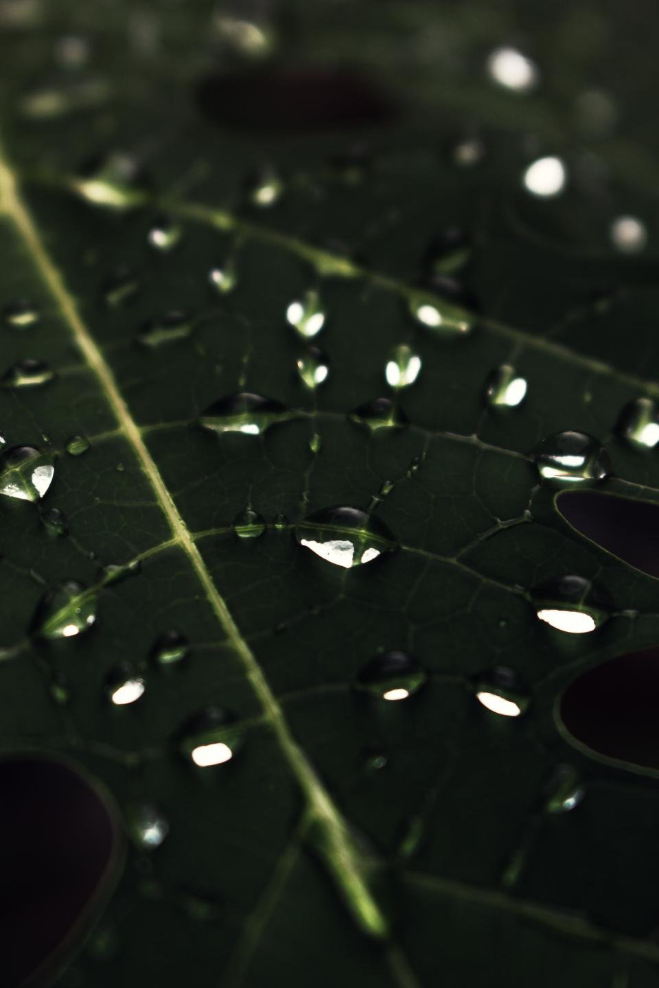 nature plants leaves veins rain water droplets macro still bokeh