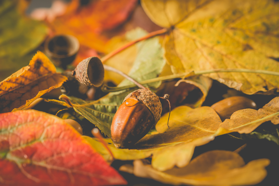 close-up autumn tree nuts fll orange red nature green colorful fall leaves nut plant season texture
