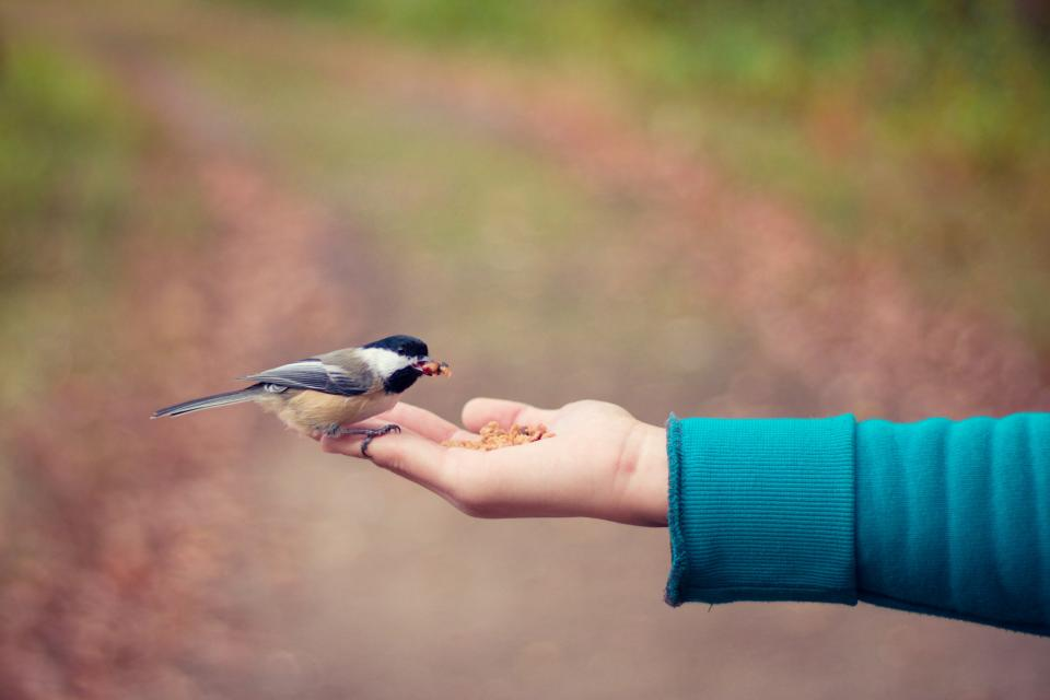 bird fly hand food