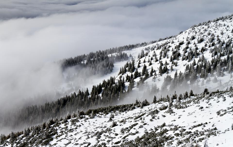 nature landscape woods forest snow winter cold weather mountain travel adventure clouds sky fog white
