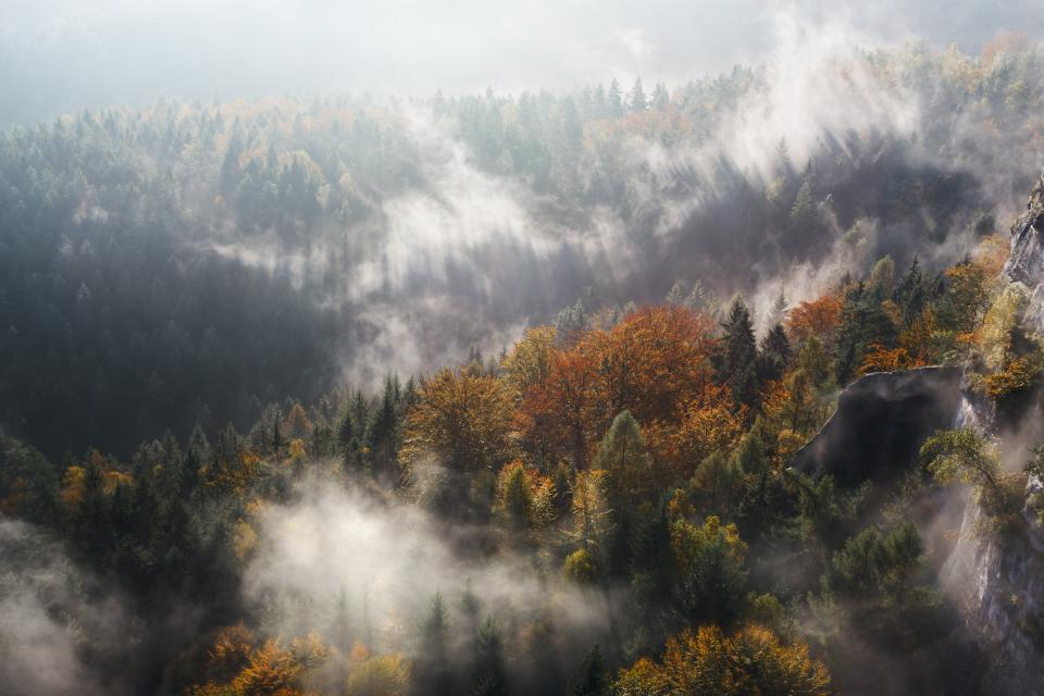 nature landscape trees forest woods fog autumn fall summer