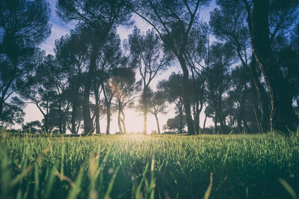 green plant nature agriculture field farm trees nature outdoor sunlight sunrise