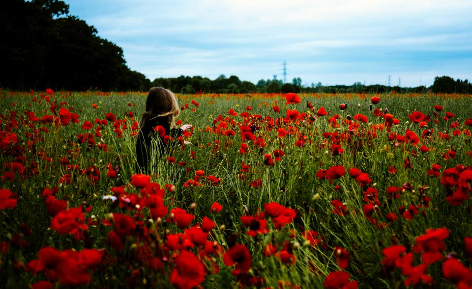 people woman girl alone solo field nature trees red flowers grass sky clouds