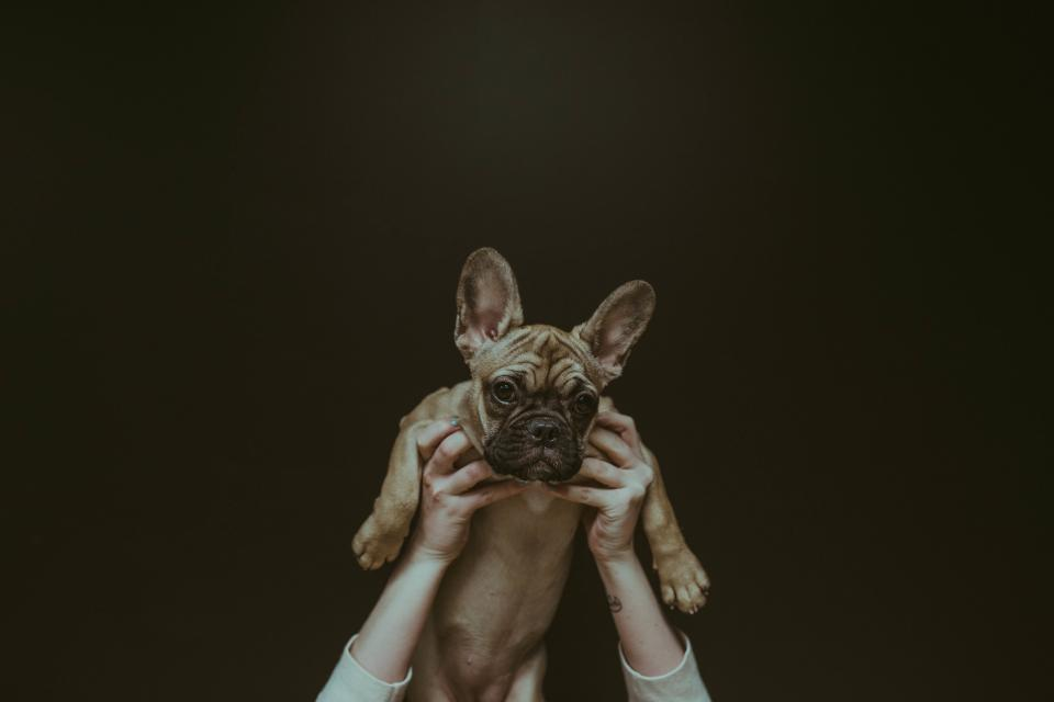 dog puppy animal hands owner people photography ears paws
