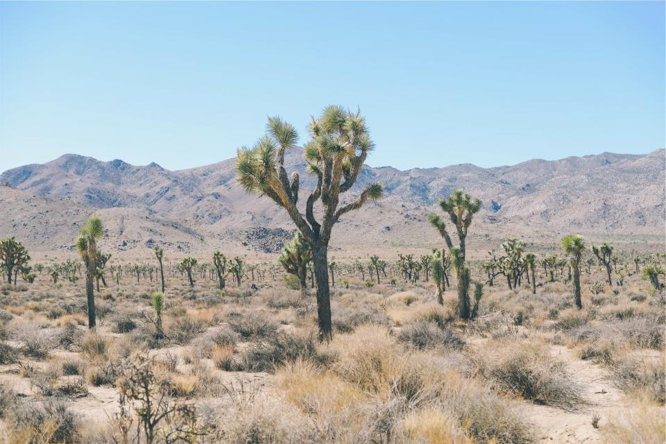 desert trees shrubs field mountains landscape nature blue sky