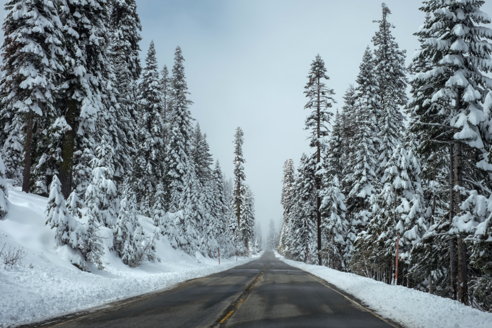snow cold winter trees forest road highway blue sky