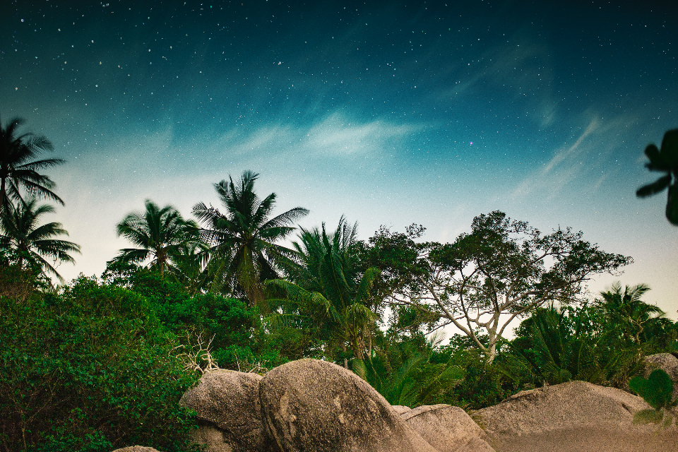 night trees stars jungle tropical travel wanderlust rocks clouds nature outdoors adventure