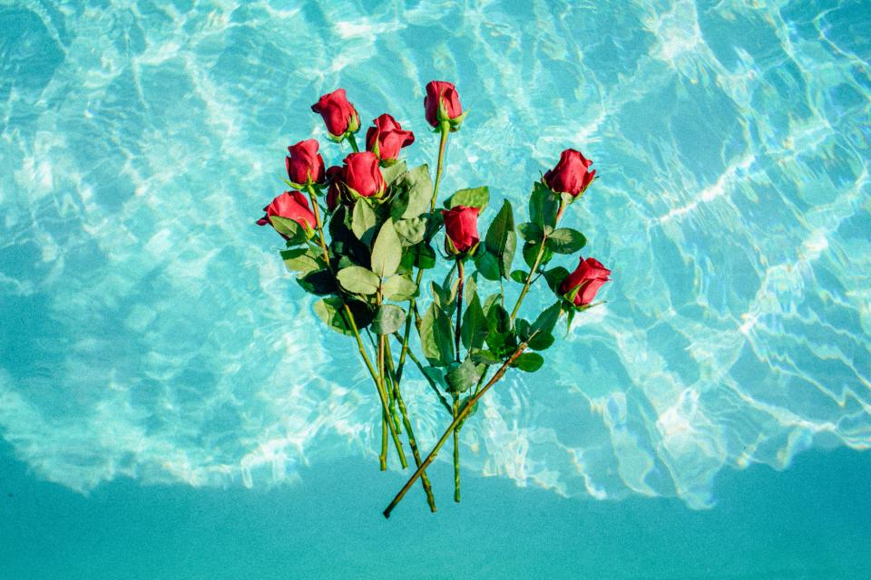 nature water flowers roses red teal