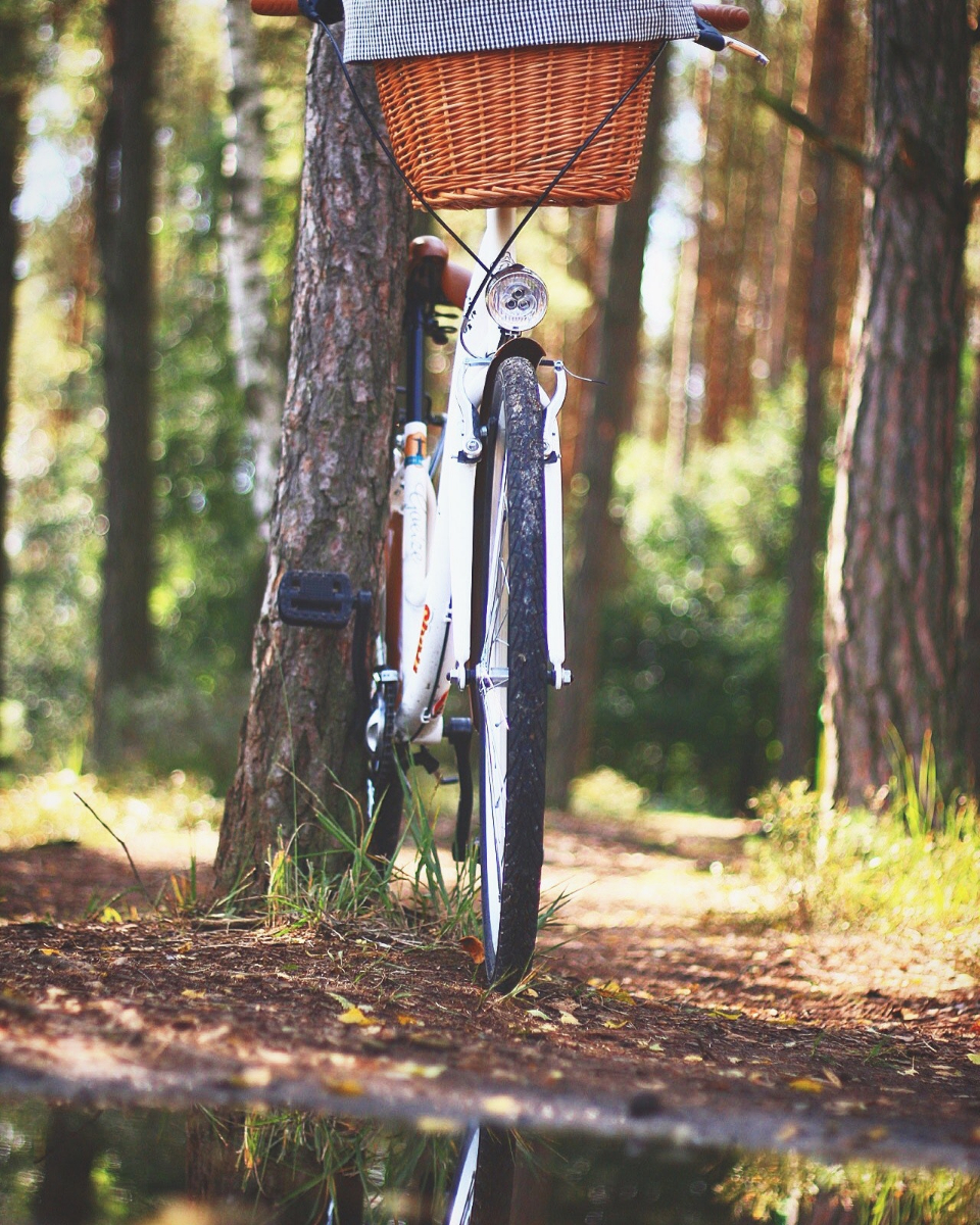 bicycle adventure forest basket bike cyclist woods sport grass leaves leisure outdoors recreation road summer trees water wheel summer