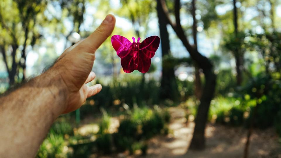 hand arm butterfly trees plant nature bokeh blur