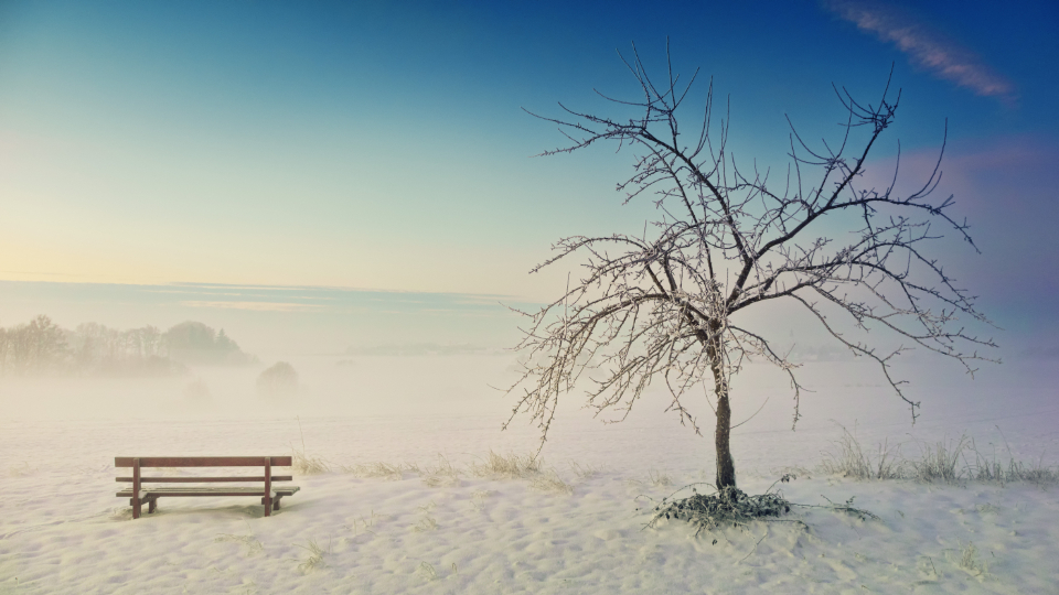 park bench winter ice cold frozen snow tree barren blue sky nature mist