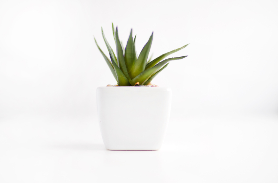 house plant white pot green nature minimal wallpaper high resolution shadow clean
